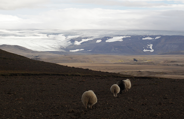Iceland09